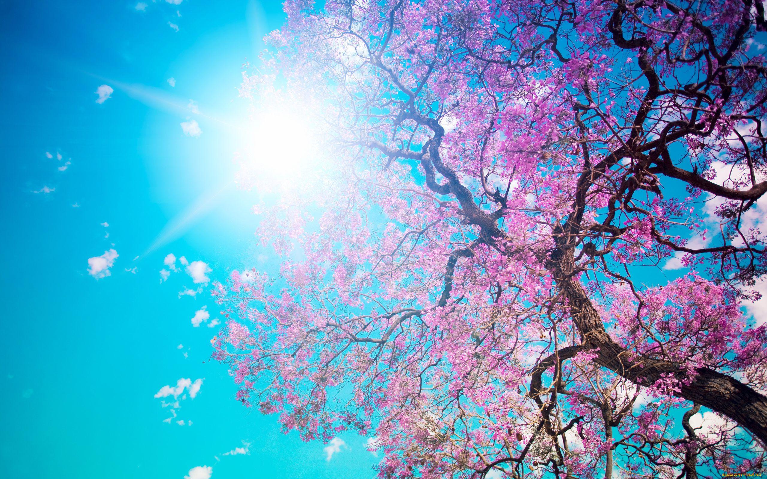 Японские красочные картинки
